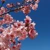 コメントへのお礼と Torrance桜祭りと 庭のその後