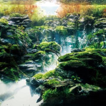"""室内に自然を持ち込む、""""世界の見え方まで変わる""""美しき水草水槽の奥深い世界"""