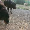 シニア犬の体調管理。