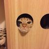 猫も見かけによらない