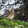 【野鳥の写真】札幌市の豊平公園で野鳥を撮ってみました