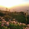朝日の中の花たち。