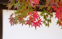 【速報】日本語能力試験の申込受付は9月4日(金)~17日(木)17時まで