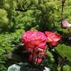 【日比谷公園にお出かけ】東京都内のバラのロケーションフォトスポット