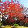 #39 紅葉見ごろ!の殿ヶ谷戸庭園 (東京、国分寺)