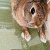 ウサギのお店で爪切りとグルーミング