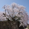 PENTAX K-3で桜「金沢城鶴丸倉庫」