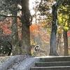 朝の木洩れ陽が神々しい春日大社にお参りしました(奈良県)2020/11/15