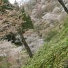 吉野山余話・「桜井の別れ」と如意輪寺