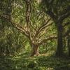 一本の木を見つめる細心さと、森全体を見渡す大胆さが大切だ。