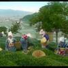 江南信國が撮影した静岡の茶畑はどこにあったのか