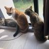 【猫ブログ】愛する猫ちゃんと梅雨を過ごそう。