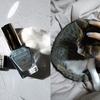 キャンメイク カラフルネイルズ N28 スモーキーアクアのレビューを、猫に邪魔されながらお送りします