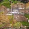 [20/05/12]「琉花」の「サバのマスタード炒め(日替わり弁当)」 300円 #LocalGuides