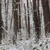 飛騨の冬景色 【この冬最後の雪景色かな?】Vol 2