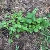 【荒地開拓記2】笹、葛だらけの荒地をユンボで開墾しました