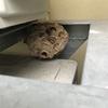 浜松市で室外機の下の狭いスペースに巣を作るスズメバチを駆除してきました