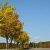 四季の杜公園で秋色探し…