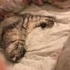 猫とゆたぽん