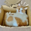 愛着ある箱から新しい箱への乗り換えがスムーズすぎる愛猫w