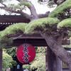 長谷寺の提灯と松