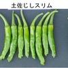 ししとう1 トウガラシと聞けば,だれでも「辛さ」をイメージしますが,「ししとう」は,甘唐辛子とよばれる,辛み成分カプサイシンのないトウガラシの一つ.京の伝統野菜田中とうがらしが,「ししとう」の元祖といわれています.ピーマンと違って,時々辛みを持ったものが混ざりますが,学名はピーマンと同じ.
