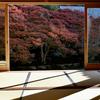岐阜市にある大龍寺「どうだん庭園秋の特別公開」