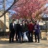 お掃除ボランティアと桜はカワヅザクラ