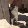 猫が賛助出演して気に入る