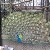 埼玉県こども動物自然公園に行ってきました(その3)