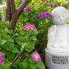 紫陽花とお地蔵さんのコラボ写真を撮るなら観音寺(紫陽花寺)がお勧め~ ~広島市~