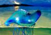カツオノエボシは危険?海水浴の時期に猛毒を放つ「美しきクラゲ」とは?刺された時の応急処置方法とは?