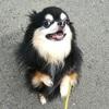 【多頭飼い】毎月の出費はいくらになるのか?犬と暮らすお金の話。