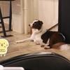 犬がじゃれ合うカフェに行ってきました