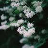 【鬼怒川・日光】春と夏の間の花