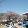 下野市天平の丘公園に桜を撮りに行ってきました。