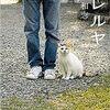 【BOOK NEWS】「ネコメンタリー 猫も、杓子も。」保坂和志編(本日深夜再放送)と柚月裕子編(13日放送)!