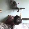 息子と猫の関わり