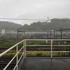 台風で またまた観音 ずぶ濡れに