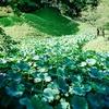 【小石川後楽園】のんびりと日本庭園をまわろう