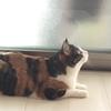 【愛猫日記】毎日アンヌさん#73