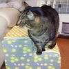 猫の変形性関節症
