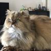 天国に旅立ったネコと死者の声 vol.4
