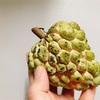 【台湾】まるでお釈迦様の頭!南国フルーツの釈迦(シュガーアップル)