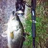 2013/5/25 琵琶湖南湖東側 2匹(44cm,41cm)
