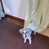 ❝仕切りはカーテンで❞   愛犬と暮らす家の工夫④