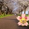 今年も満開、桜も、チェリムの笑顔も!【ポケモンGOAR写真】多摩川河川敷にて