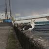 輪島へ行って撮れた写真がウミドリだった