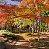 洞峰公園~つくば市とその周辺の風景写真案内(47)