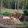生後9ヶ月。動物園に行って来ました♪